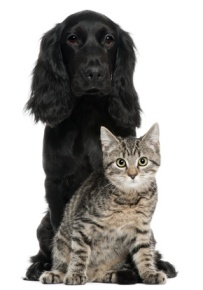 McTimoney Chiropractic Treatment for Animals - image of dog & cat